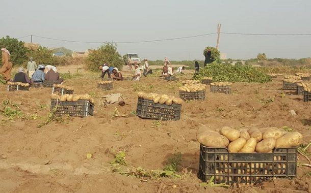 دراسة حديثة تقدر تراجع إنتاجية القطاع الزراعي والسمكي اليمني بنسبة 33%