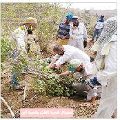 دراسة: 260 مليون شجرة قات تستنزف نحو 50 ٪ من المياه الجوفية المستخرجة
