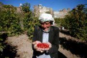 من القات إلى البن: حراز تحيي صيت اليمن في العالم